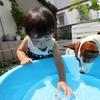 夏はやっぱり水遊びのタイトル画像