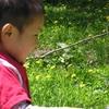 夏、自然のなかで親子で遊ぼう!のタイトル画像