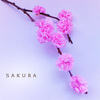 親子で作ろう!春にオススメ手作り「八重桜」のタイトル画像