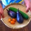 【食育】旬の食材を美味しく食べる3つのキーワード「走り、盛り、名残」とは?のタイトル画像