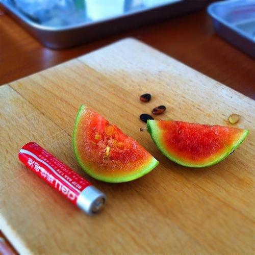 果物って生きてるの?食べた果物のタネをまいてみると・・?のタイトル画像
