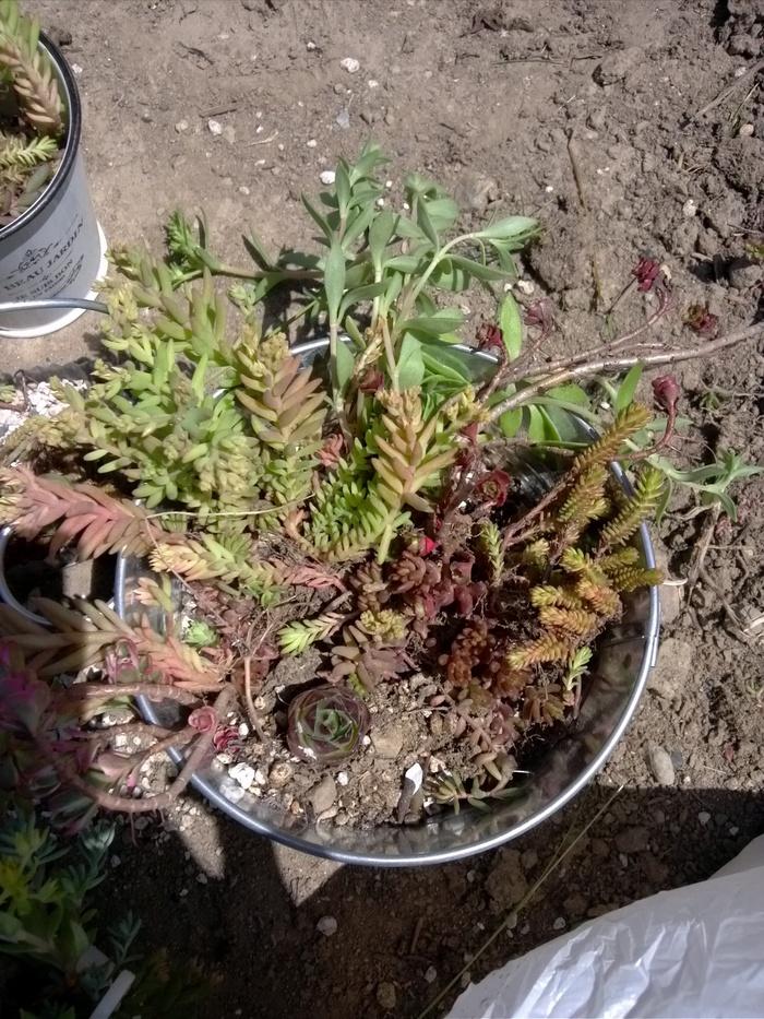 子どもと一緒に♪多肉植物の寄せ植えの方法!の画像4