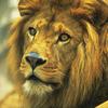 【読み聞かせ】長新太の傑作絵本「へんてこライオン」シリーズの魅力とは?のタイトル画像