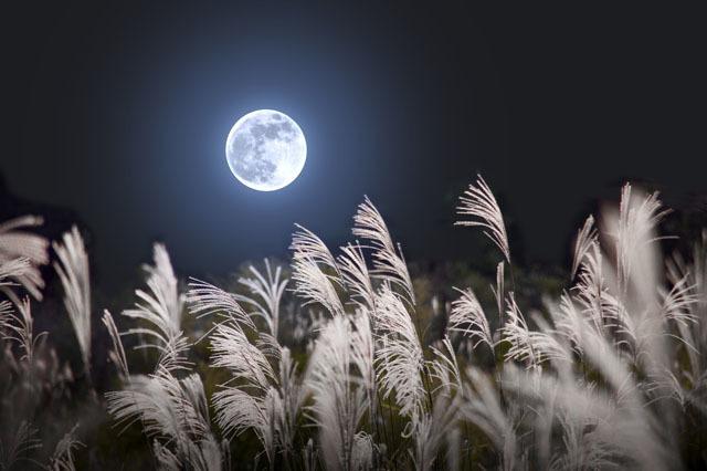 今年の『中秋の名月』は9月27日!お月見を親子で楽しむ方法の画像3