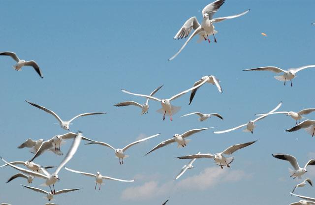 記念日は空と海の間で!親子で東京湾クルーズ体験!の画像2