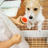 【ペットがいる家族必見!】犬と赤ちゃんの初対面は?気になる「犬が赤ちゃんに与える影響」とはのタイトル画像