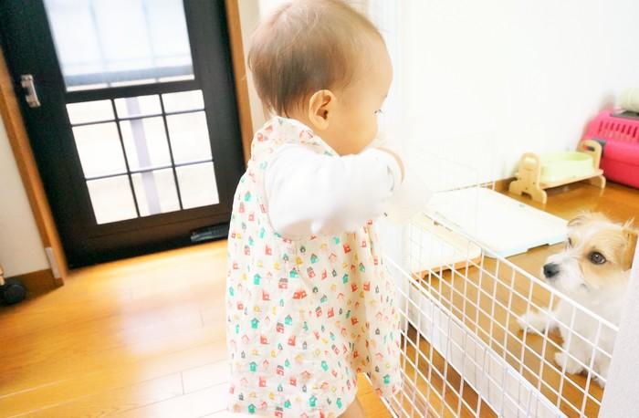 【ペットがいる家族必見!】犬と赤ちゃんの初対面は?気になる「犬が赤ちゃんに与える影響」とはの画像2