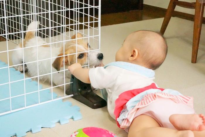 【ペットがいる家族必見!】犬と赤ちゃんの初対面は?気になる「犬が赤ちゃんに与える影響」とはの画像1