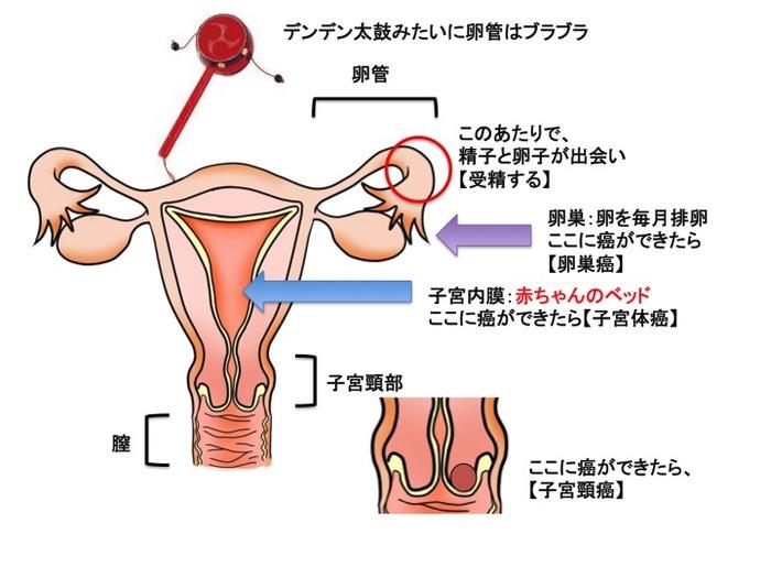 ひどい生理痛や不妊症の原因にも…「子宮内膜症」ってどんな病気?症状やメカニズムを知っておこうの画像3