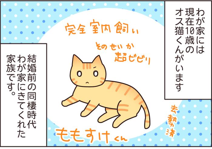 猫と赤ちゃんの同居はNG?妊娠中に、猫を手放せと言われた話…の画像1