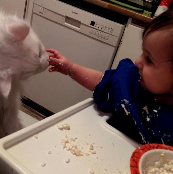 ハイハイして近づいた赤ちゃんに猫は…? 癒される動画まとめ[第3弾]の画像1