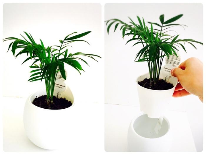 忙しいママでも!ズボラさんでも!育てやすく長持ちする観葉植物を楽しもう♪の画像3
