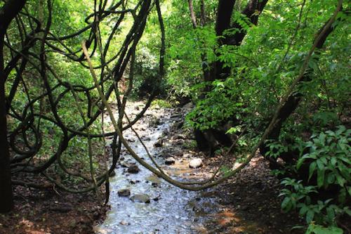おむつの中の湿度は●●%!?熱帯雨林気候に相当する「ムレ」を解消するには?の画像1