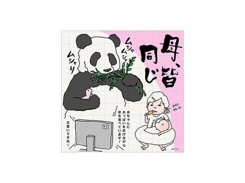 「上野の母パンダに、親近感。」新米ママのリアルに共感せずにはいられない!!のタイトル画像