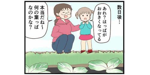 暮らしの中にある「学び」ってすごい!2歳娘が近所の畑を観察して学んだことのタイトル画像