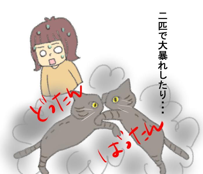 「その猫実は…」保護施設での猫との出会いに、私たちが決断したことの画像10