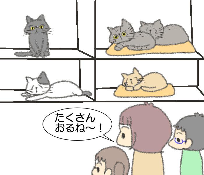 「その猫実は…」保護施設での猫との出会いに、私たちが決断したことの画像6