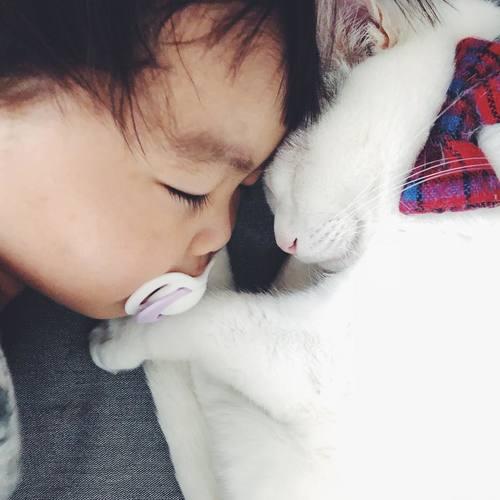 猫とボクはとっても仲良し。だって、赤ちゃんの時から一緒にいるんだもん。のタイトル画像