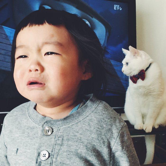 猫とボクはとっても仲良し。だって、赤ちゃんの時から一緒にいるんだもん。の画像16