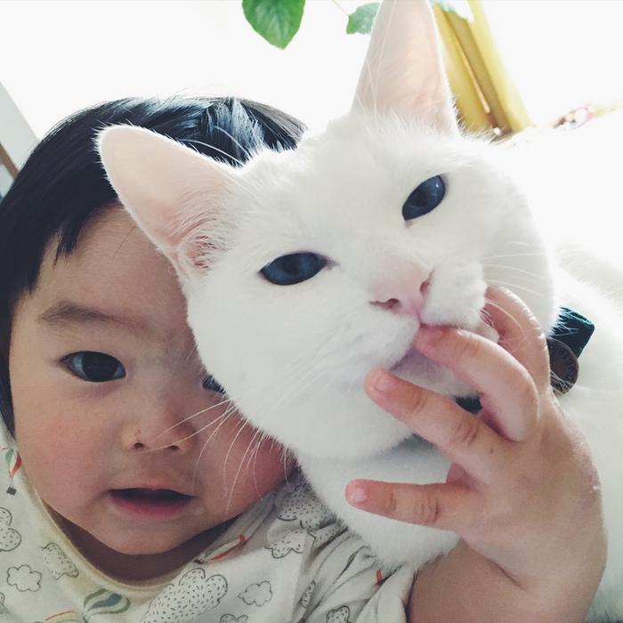 猫とボクはとっても仲良し。だって、赤ちゃんの時から一緒にいるんだもん。の画像18