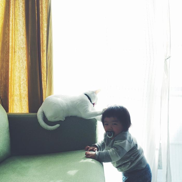 猫とボクはとっても仲良し。だって、赤ちゃんの時から一緒にいるんだもん。の画像12