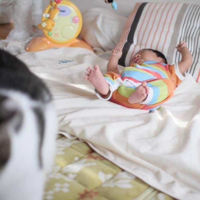 赤ちゃんのときから、ずっと一緒。猫のマイロとぼくの成長記録。の画像1