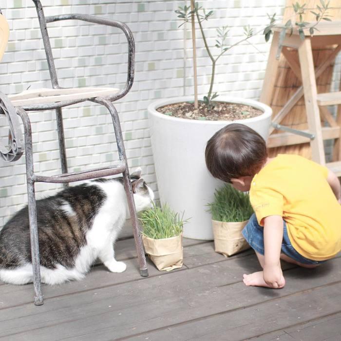 赤ちゃんのときから、ずっと一緒。猫のマイロとぼくの成長記録。の画像13