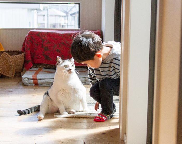 赤ちゃんのときから、ずっと一緒。猫のマイロとぼくの成長記録。の画像24