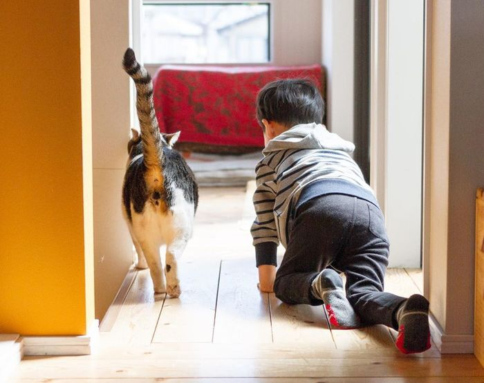 赤ちゃんのときから、ずっと一緒。猫のマイロとぼくの成長記録。の画像22