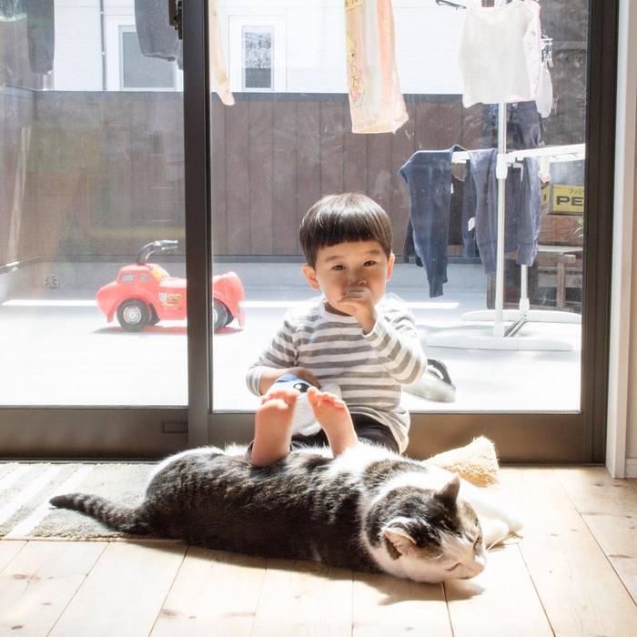 赤ちゃんのときから、ずっと一緒。猫のマイロとぼくの成長記録。の画像17