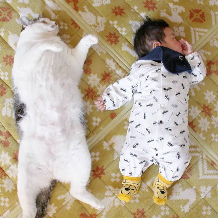 赤ちゃんのときから、ずっと一緒。猫のマイロとぼくの成長記録。の画像3