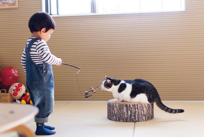 猫のいる育児。隣同士のひなたぼっこ姿が…ああ、優しい。の画像2