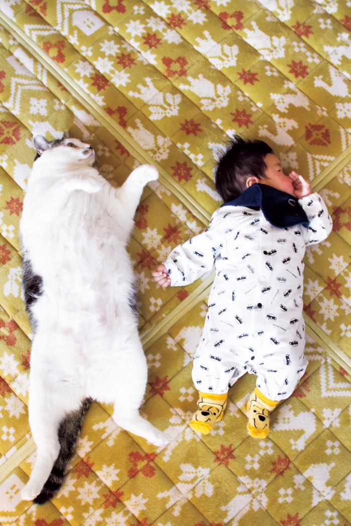 猫のいる育児。隣同士のひなたぼっこ姿が…ああ、優しい。の画像1