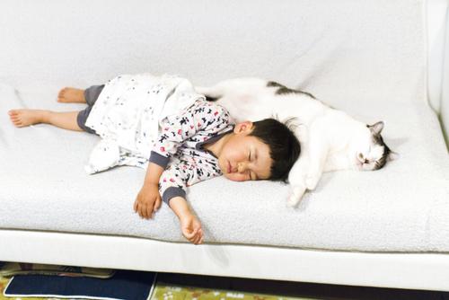 猫のいる育児。隣同士のひなたぼっこ姿が…ああ、優しい。のタイトル画像