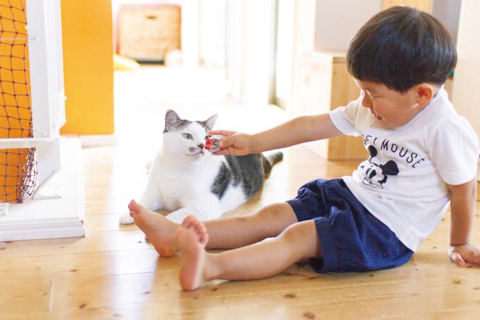 猫のいる育児。隣同士のひなたぼっこ姿が…ああ、優しい。の画像7