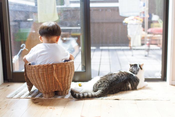 猫のいる育児。隣同士のひなたぼっこ姿が…ああ、優しい。の画像5