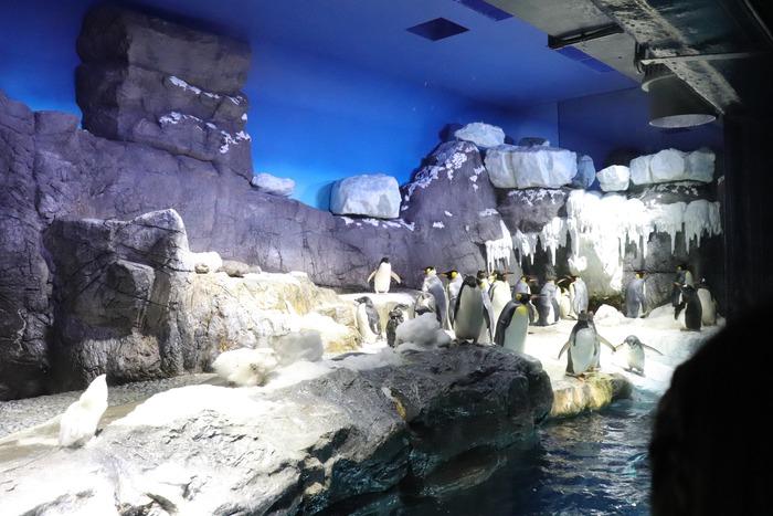 世界最大級の水族館!関西の人気おでかけスポット「海遊館」の画像3