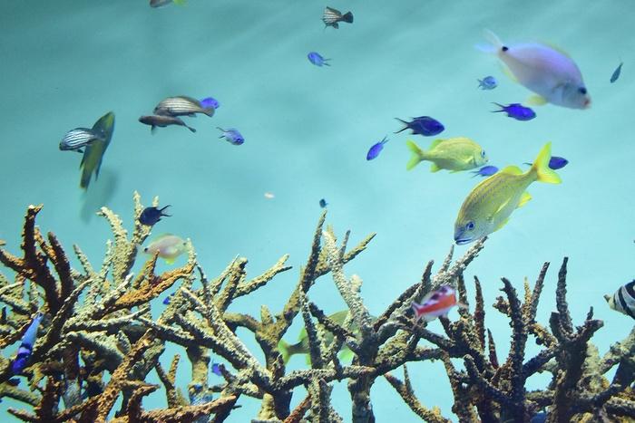 水族館デビューにおすすめ!手頃な入館料もうれしい「葛西臨海水族園」の画像6