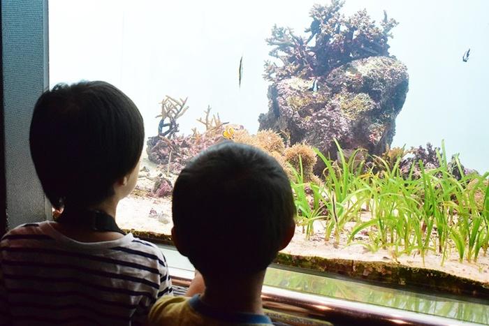 水族館デビューにおすすめ!手頃な入館料もうれしい「葛西臨海水族園」の画像3