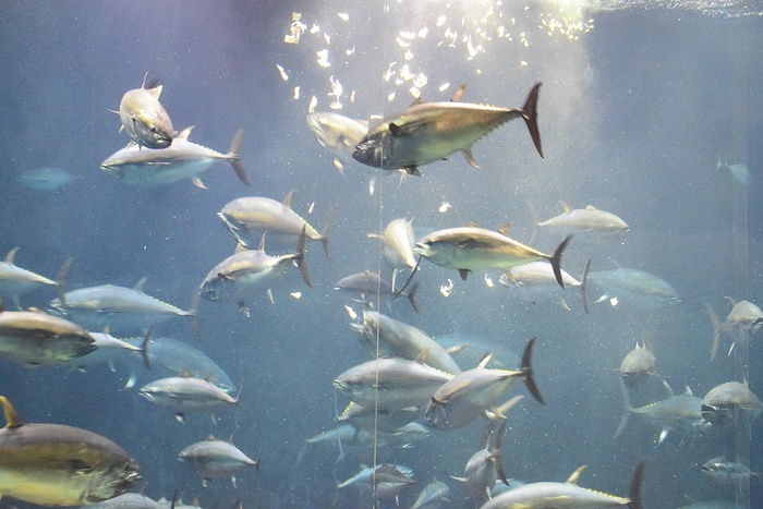 水族館デビューにおすすめ!手頃な入館料もうれしい「葛西臨海水族園」の画像7