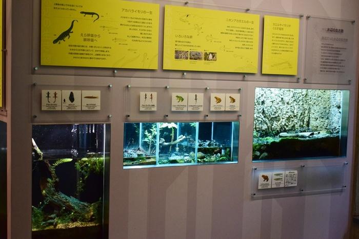 水族館デビューにおすすめ!手頃な入館料もうれしい「葛西臨海水族園」の画像19