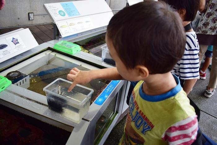 水族館デビューにおすすめ!手頃な入館料もうれしい「葛西臨海水族園」の画像10