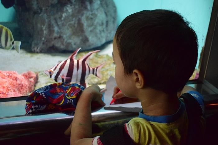 水族館デビューにおすすめ!手頃な入館料もうれしい「葛西臨海水族園」の画像5