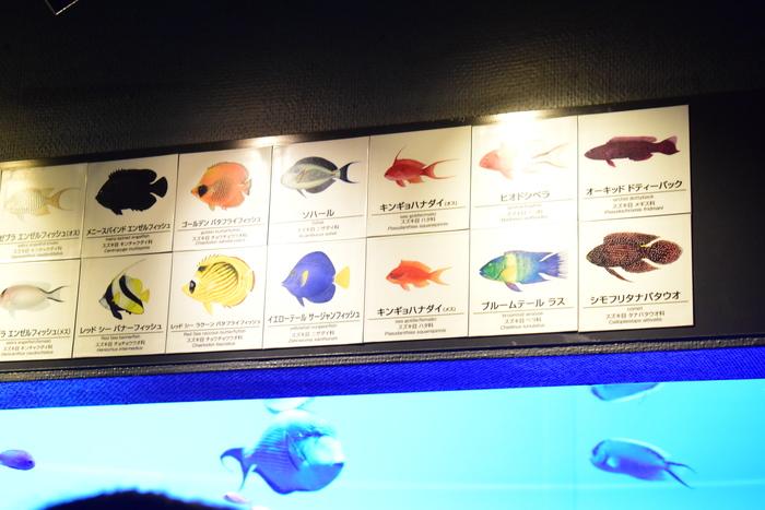 水族館デビューにおすすめ!手頃な入館料もうれしい「葛西臨海水族園」の画像4