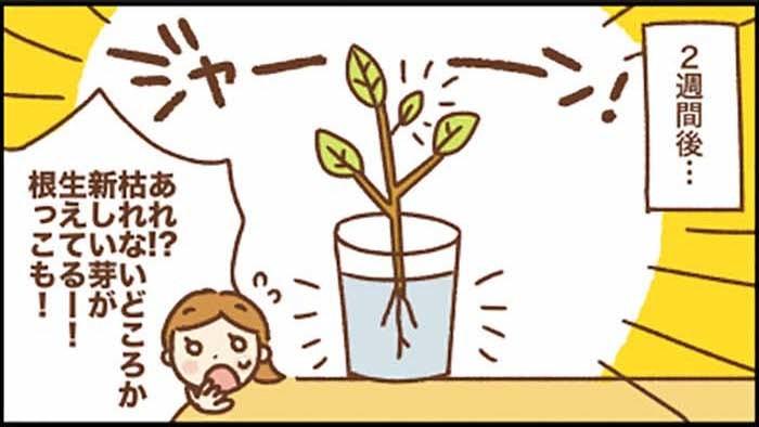 どんぐり、小石、木の枝…。子どもがポケットに入れた「宝物」が教えてくれたことの画像3