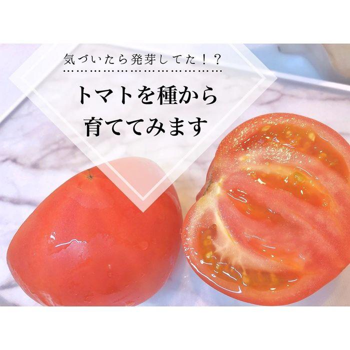トマトの種、とって植えたらどうなる!?おうち時間に楽しむ家庭菜園の画像15