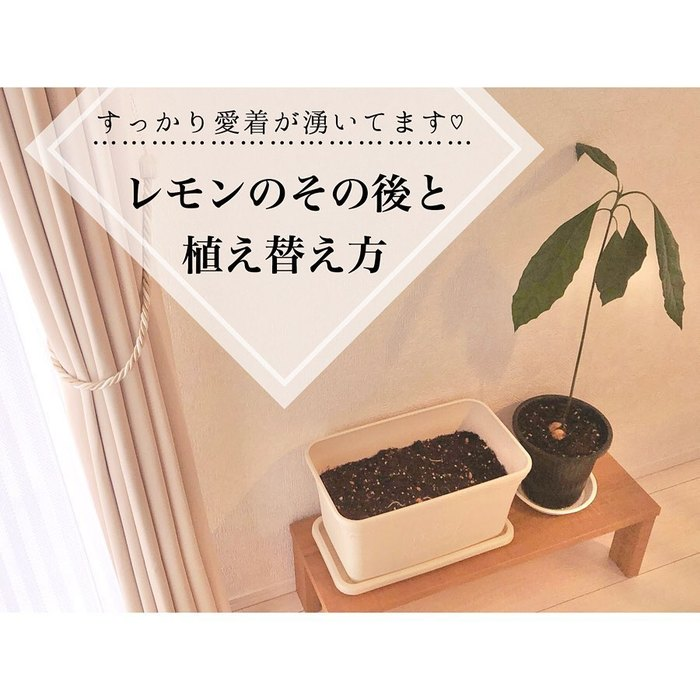 トマトの種、とって植えたらどうなる!?おうち時間に楽しむ家庭菜園の画像6