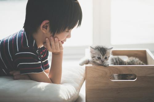 熟睡中の男の子。新入り猫の起こし方が容赦ないけどほっこりしちゃうのタイトル画像