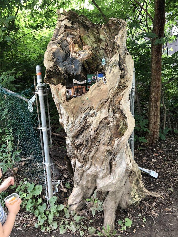近所の木に小さなドアが増えていく。もしかして……?の画像4