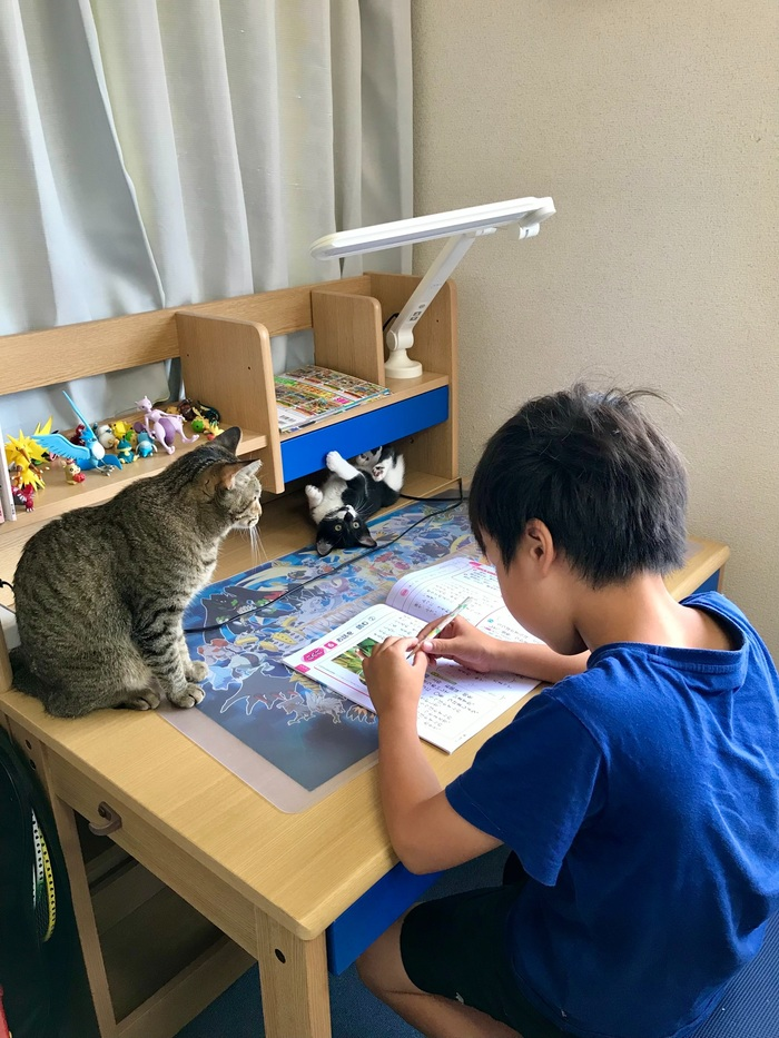 珍しく自分の部屋で勉強すると言った息子。その理由がニャンとも可愛いの画像4